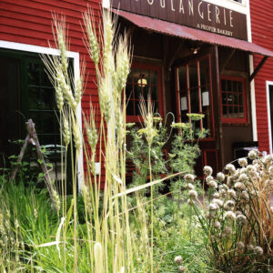 Garden at Boulangerie Bakery, Kennebunk